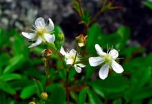 Wildflowers were abundant.