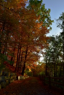 Leaf covered trails are in this season.