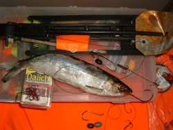 Go on the Deadbait Diet for Trophy Pike Fishing