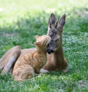 1314820084_animals_friendship_103