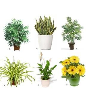 نباتات منزلية