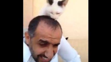 قصة وفاء قطة