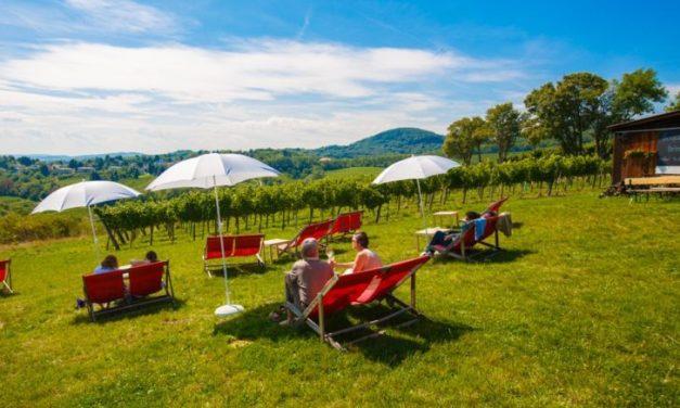 ¿Qué tal un vino entre viñedos, en … Viena?
