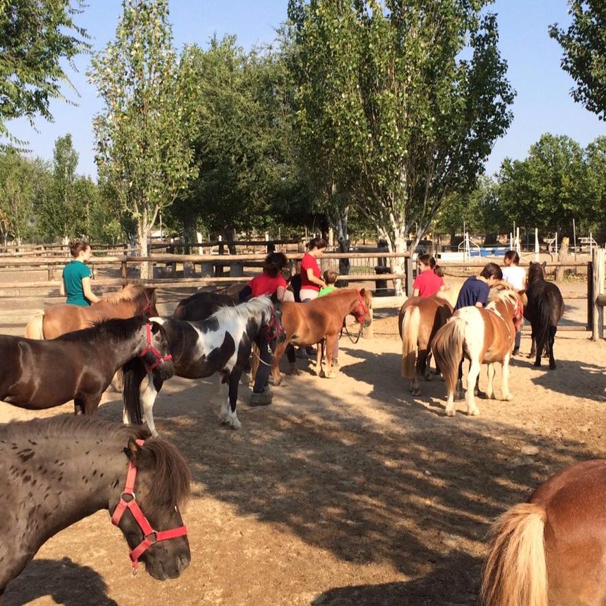 Taller con Ponies en el Centro de equitación San Jorge, Madrid