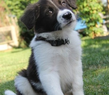 Advice and Tips Before Buying a Puppy