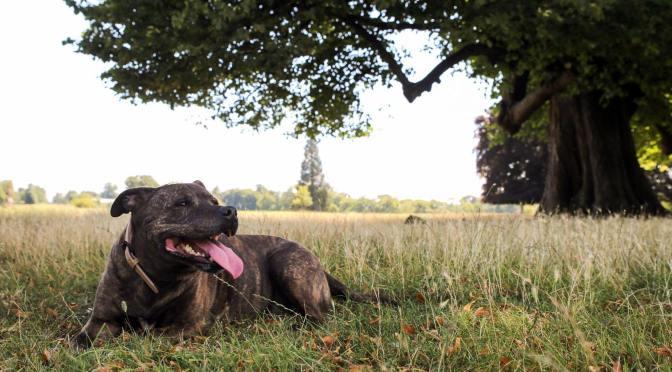 Suzi's Training Journey with her Dog Dave