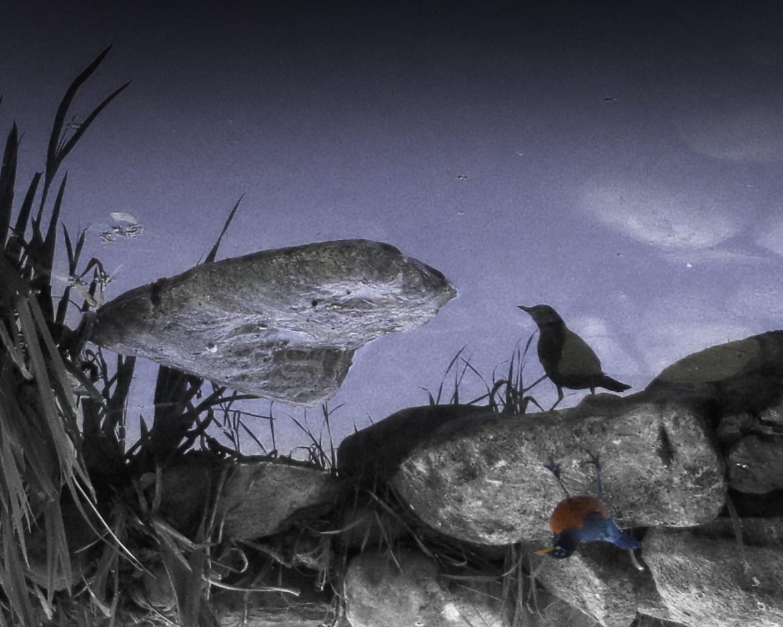 Robin's Reflection