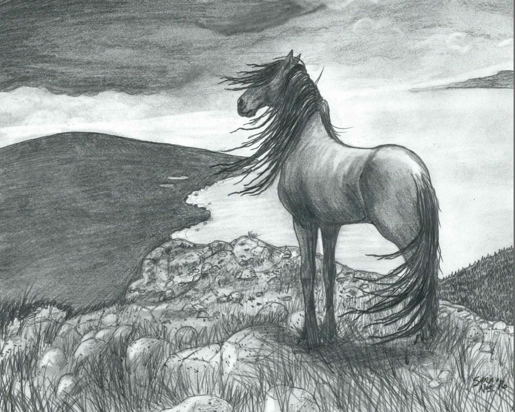 On The Bluff pencil artwork horse Sara A. Noe