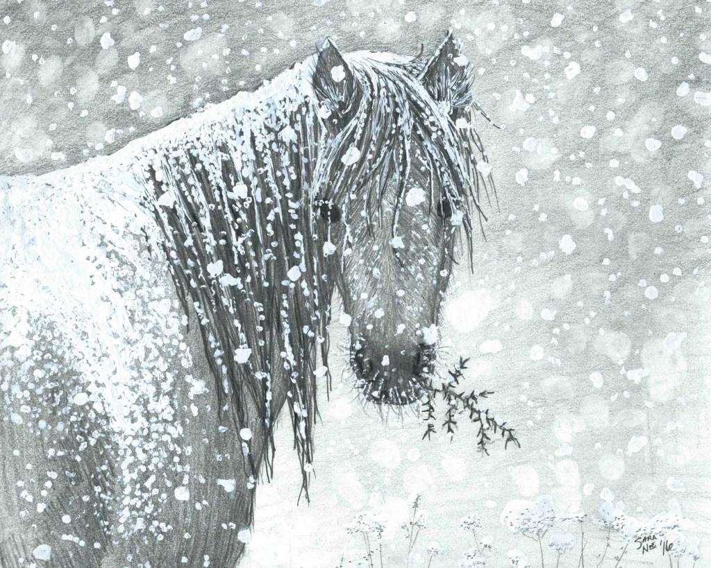 Pencil artwork horse blizzard Sara A. Noe