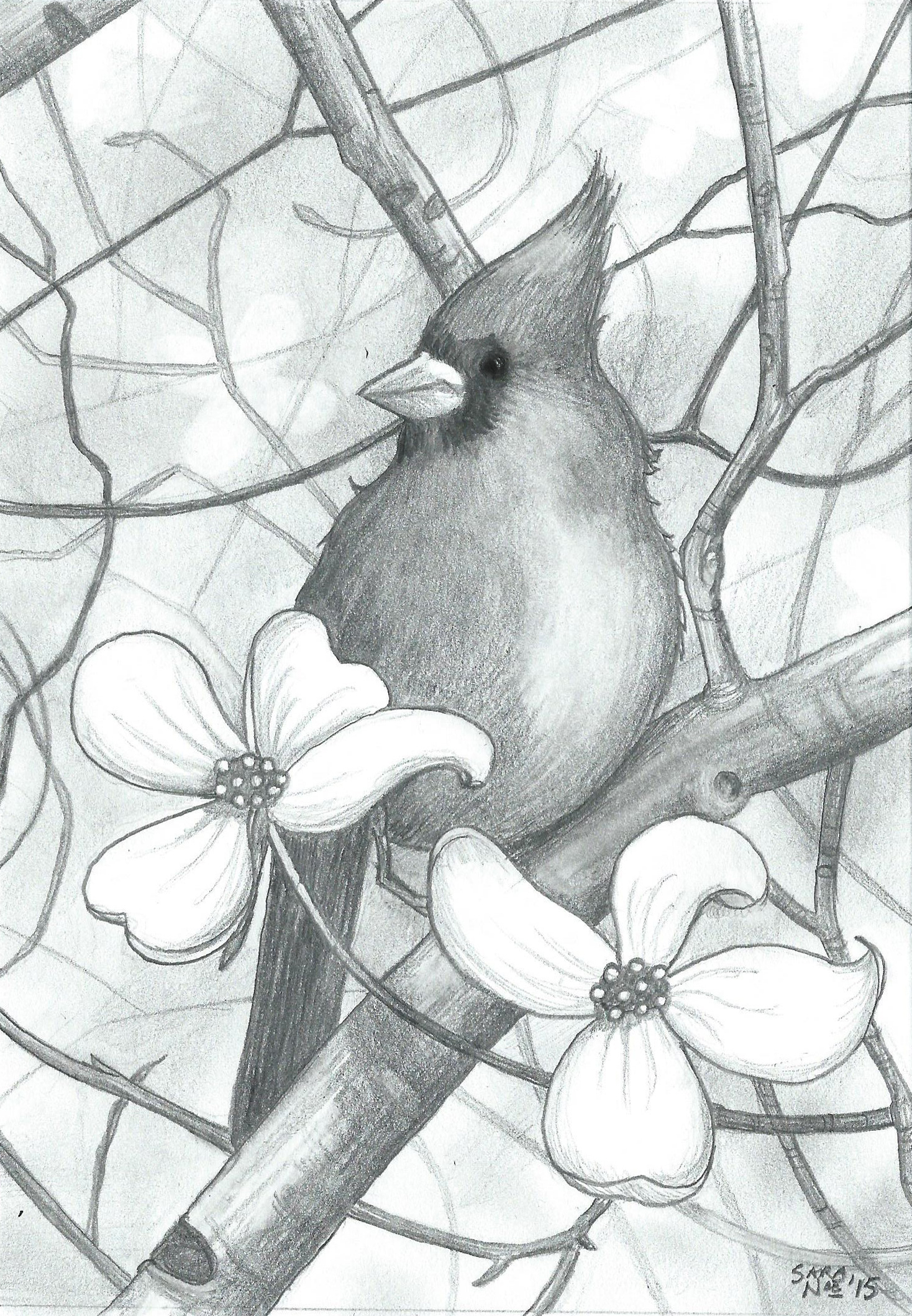 Red Dogwood cardinal pencil artwork Sara A. Noe