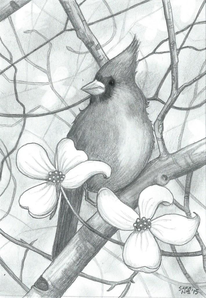 Red Dogwood cardinal pencil artwork Sara A. Noe