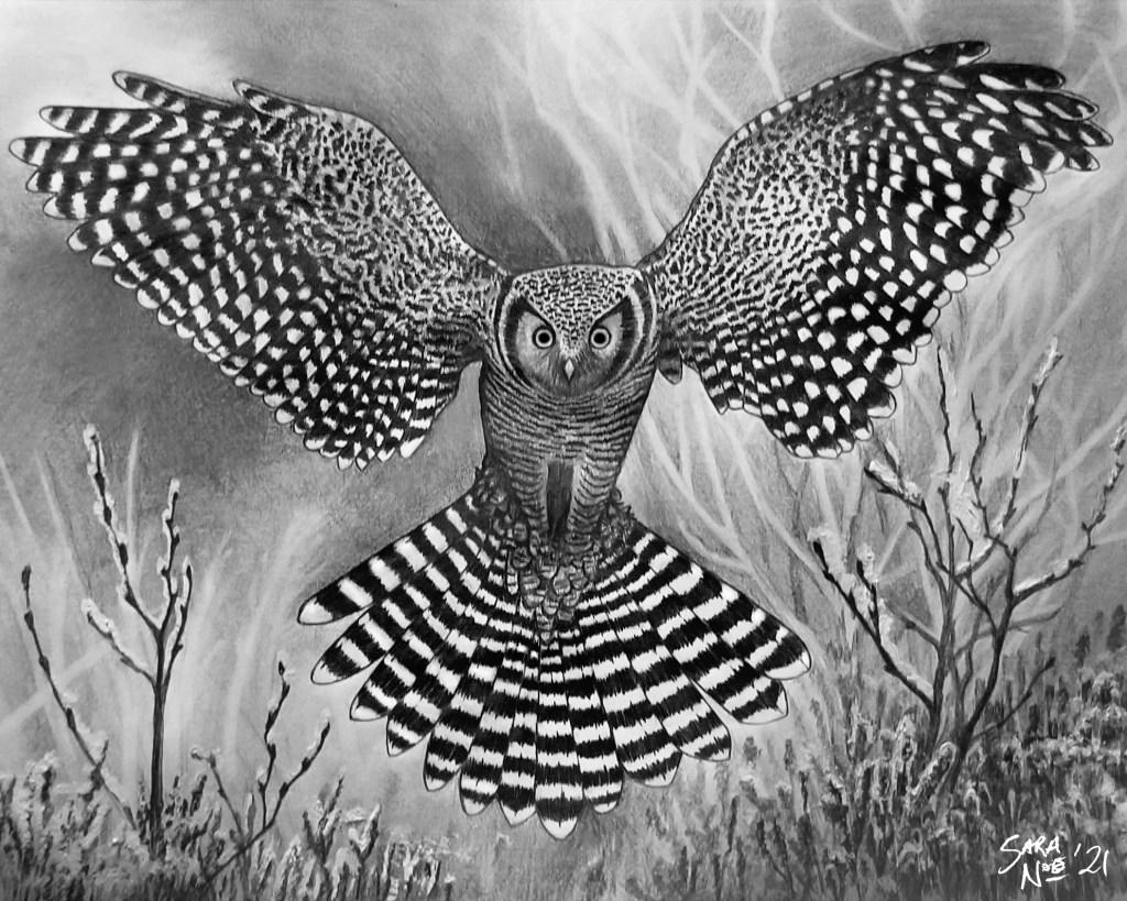 Snowy owl pencil drawing artwork by Sara A. Noe