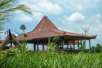 Bali Rice Walk-1