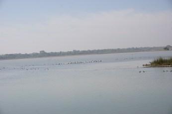 menar bird sanctuary near udaipur