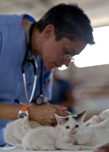 toronto vet clinics