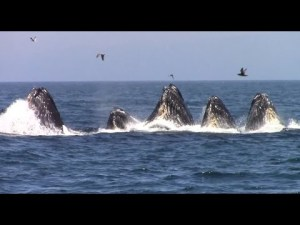 8-20 - group of whales