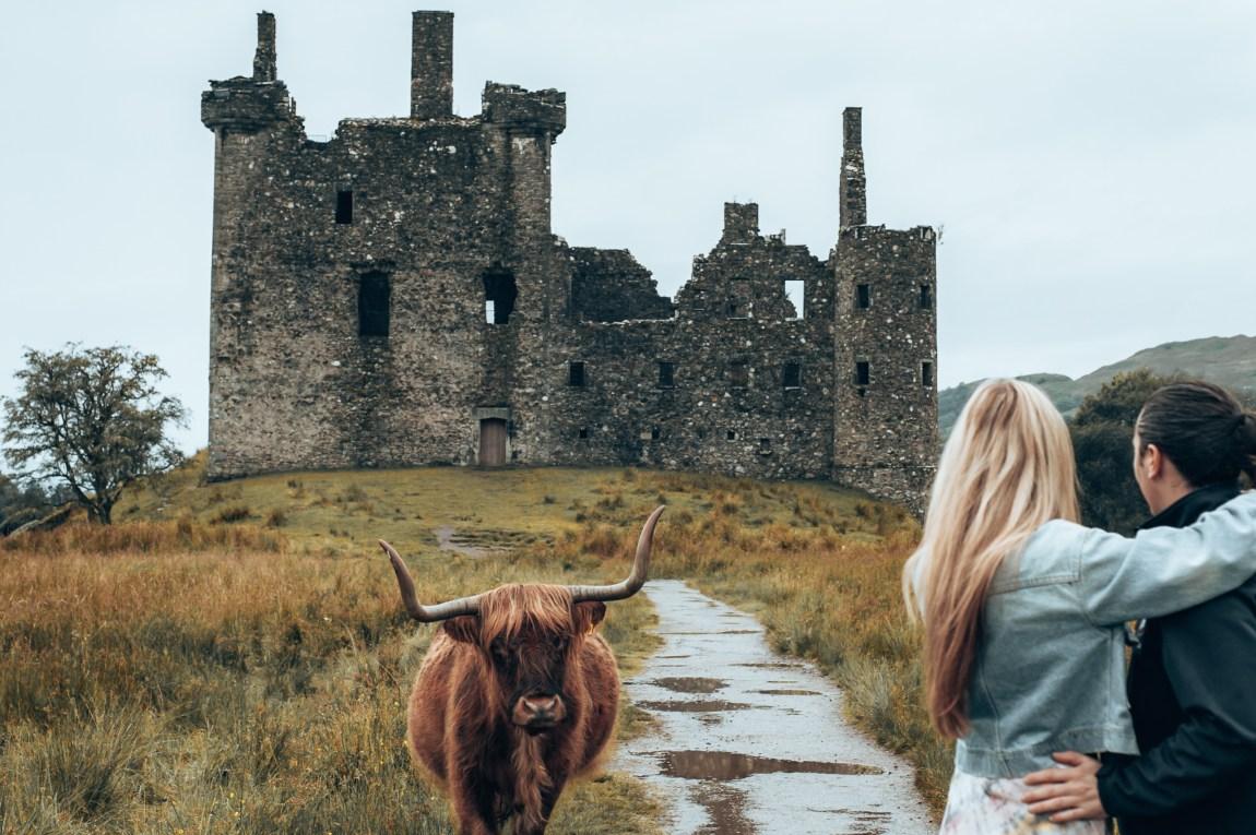 highland cow at kilchurn castle