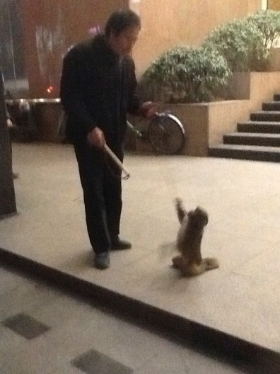 In Shanghai a man with a whip makes a small monkey do tricks for pedestrians and then demands tips.