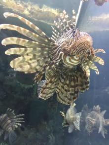 Mandalay Bay aquarium