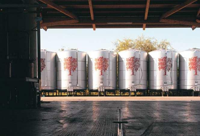 Grappa fermentation