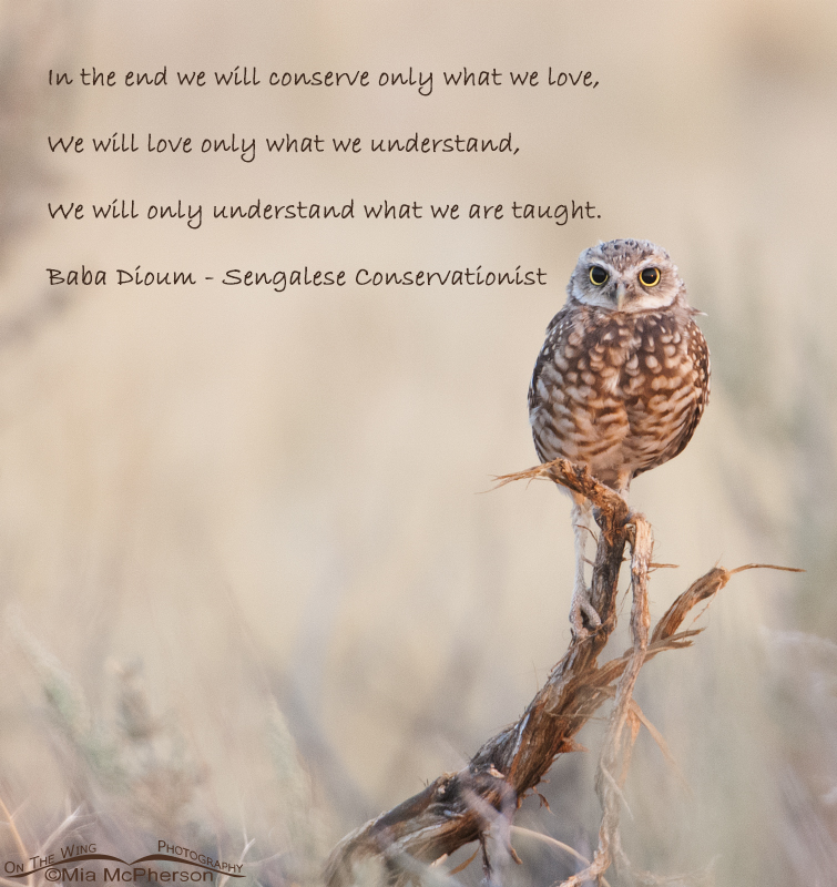 In The End We Will Only Conserve What We Love On The Wing Photography