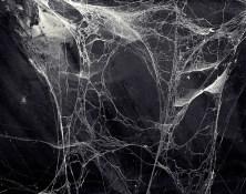 Joakim Eskildsen (c.1989-1994) The Spider