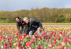 Pick your own tulips!