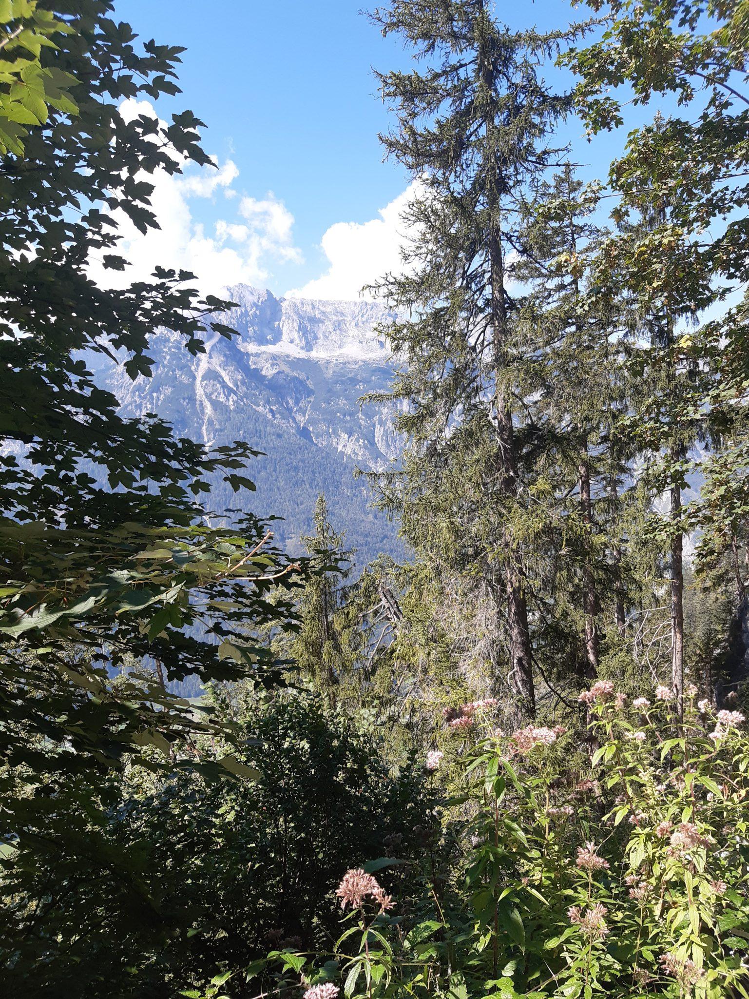 Aussicht ins Tal Bäume