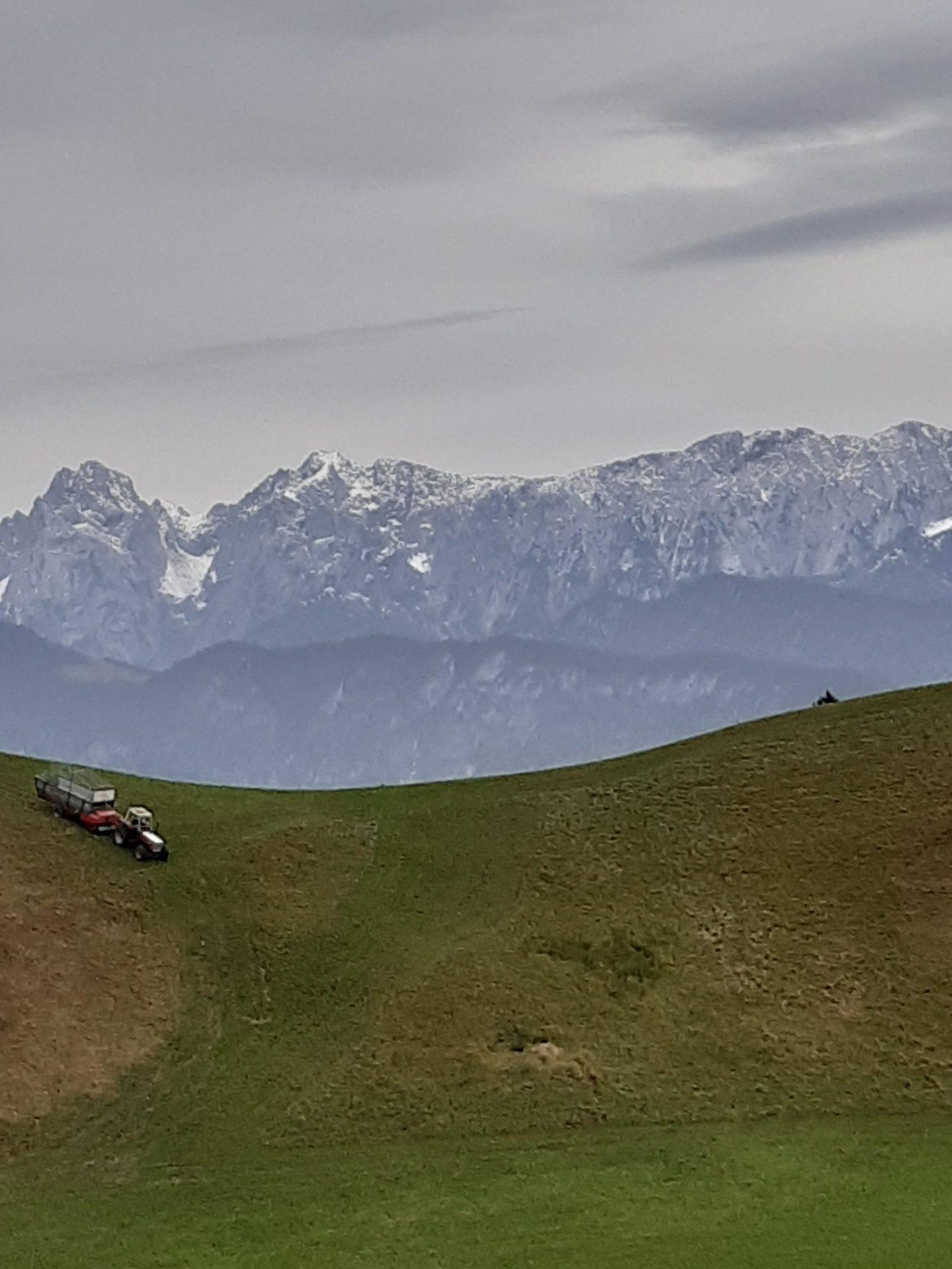 Blick auf Wilden Kaiser und Almwiese mit Traktor