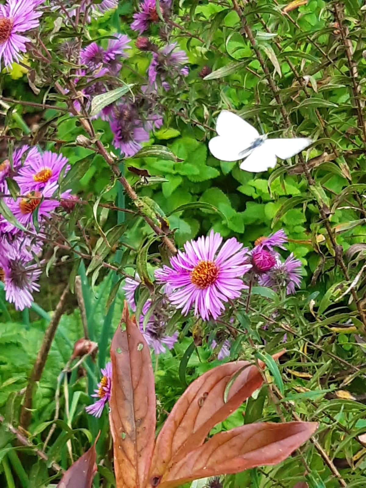 Garten Schmetterling