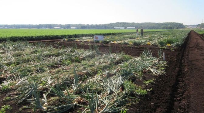 66th Annual Muck Vegetable Growers Conference