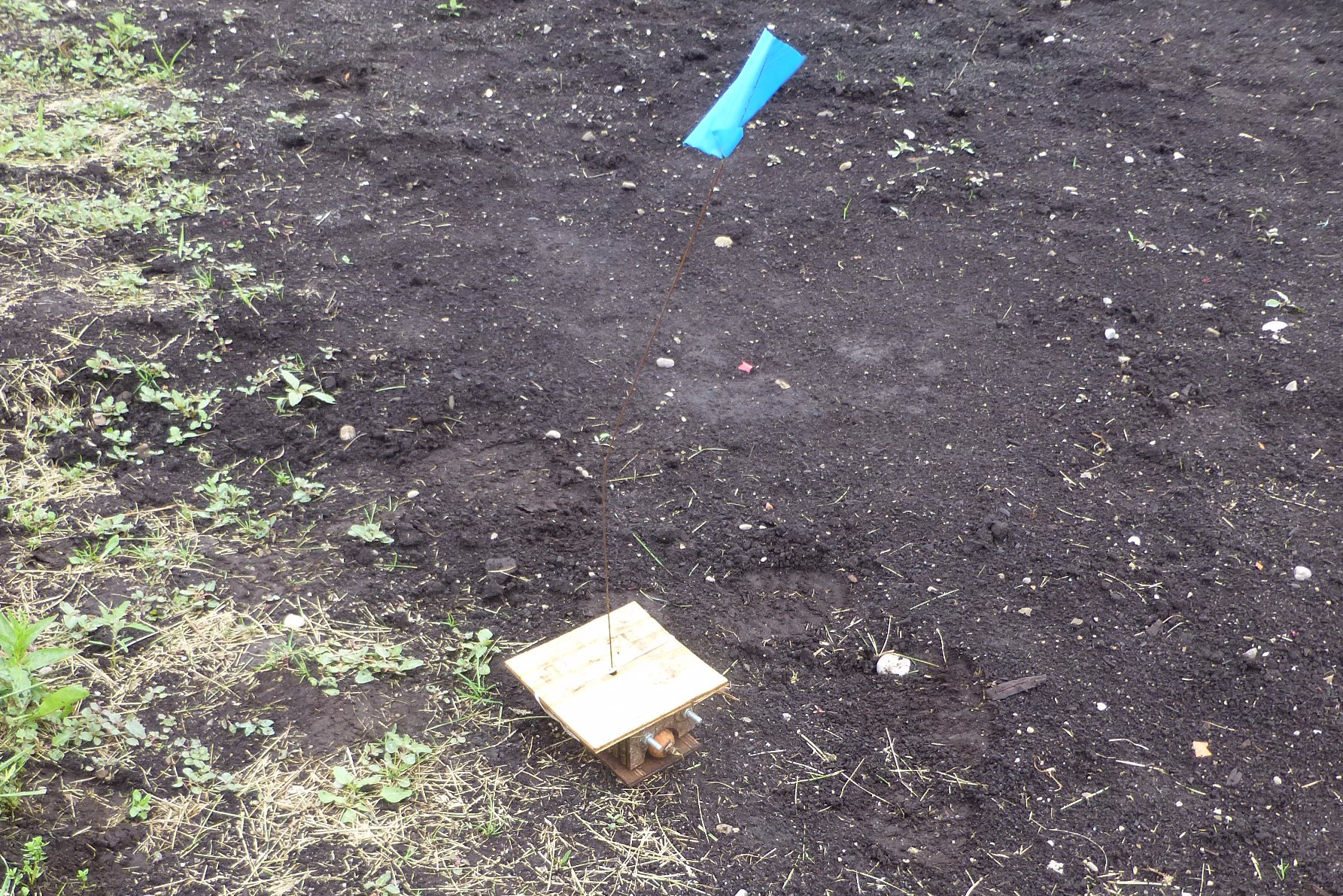 Boivin weevil trap placed at the border of a carrot field