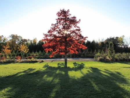 "Photo by Ali Zein Yousuf. ""Taken at the Arboretum with a Canon Powershot G11 on 10/25/09."""