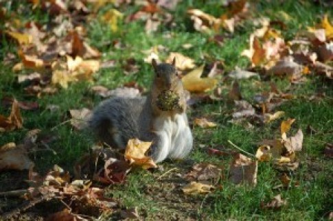 "Photo by Kat Wilcheck. ""When you think Penn State, you think squirrels. This guy is preparing for winter, and decided to strike a pose."""