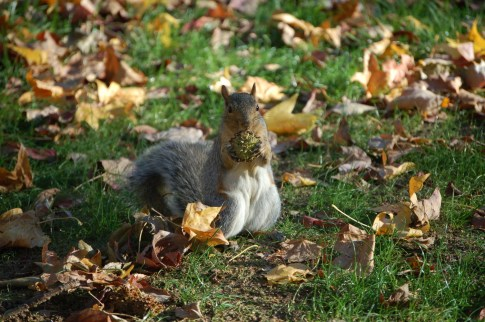 """Photo by Kat Wilcheck. """"When you think Penn State, you think squirrels. This guy is preparing for winter, and decided to strike a pose."""""""
