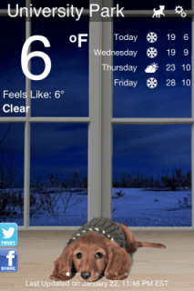 Weather Puppy Bobby 1