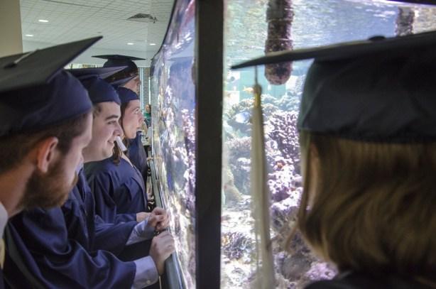 Grad fish tank