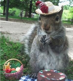smallersquirrel