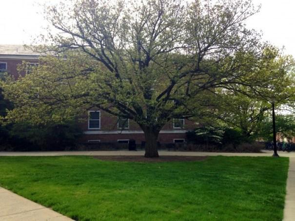 south tree