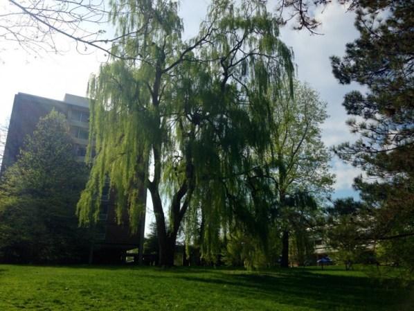 stone hall/east hall tree