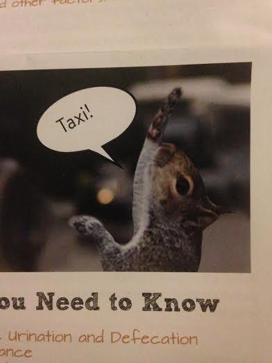 squirrel taxi party mailer