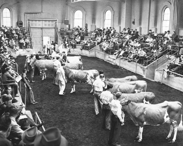 The Stock Judging Pavilion, circa 1940s (Photo: Penn State University Archives)