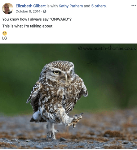 Onward owl from Liz Gilbert's Facebook page