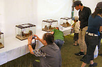 昆虫イベント 大阪府草野球場市民の広場03