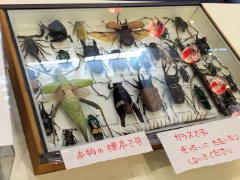 昆虫イベント用標本