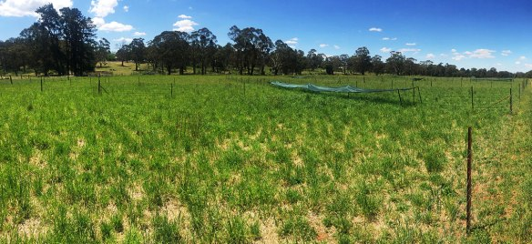 Grazing system trials in Orange NSW