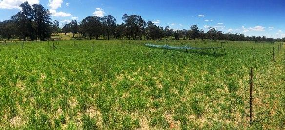 Grazing system trials in Orange NSW