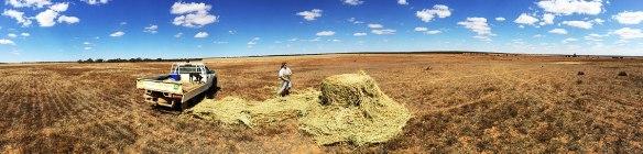 A 200ha field - probably the average farm size in East Anglia