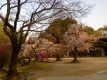 Beautiful grounds of Ninna-ji temple