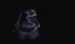 Crows, screenshot